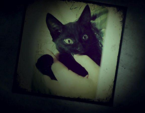 Луиджи, чёрный кот/ Luigi the Blackcat - Слайд-шоу