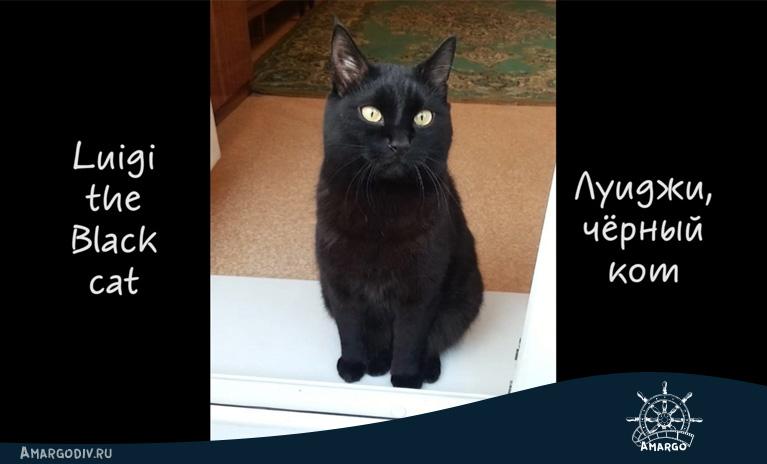 Луиджи, чёрный кот. Попытка видеосъёмки животных