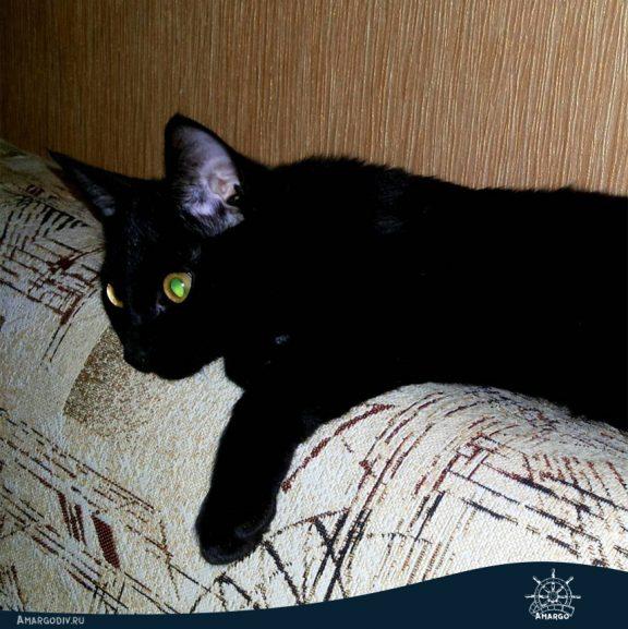 Чёрный котёнок, смотрящий телевизор